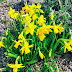 Spring: My Sunday Photo...