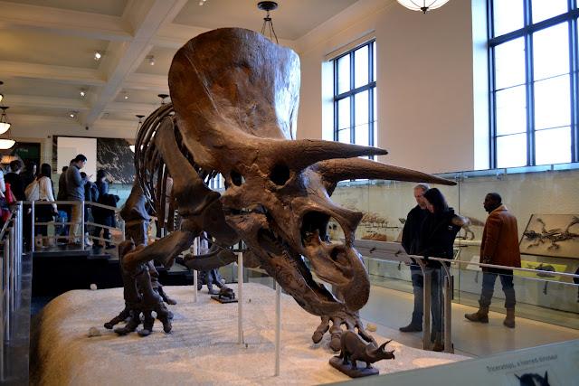 Трицераптор. Американський музей природознавства, Нью-Йорк(American Museum of Natural History, NYC)