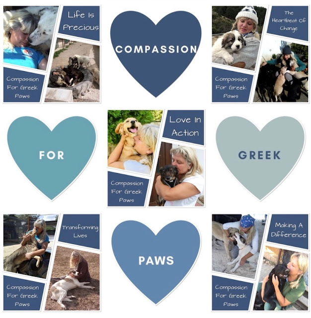 animal rescue Greek stray dogs for adoption