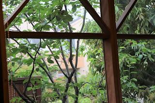 山野草盆栽教室 睦草アトリエから見える鳥