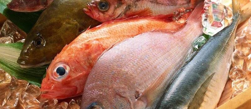 Kandungan Gizi pada Ikan Secara Umum