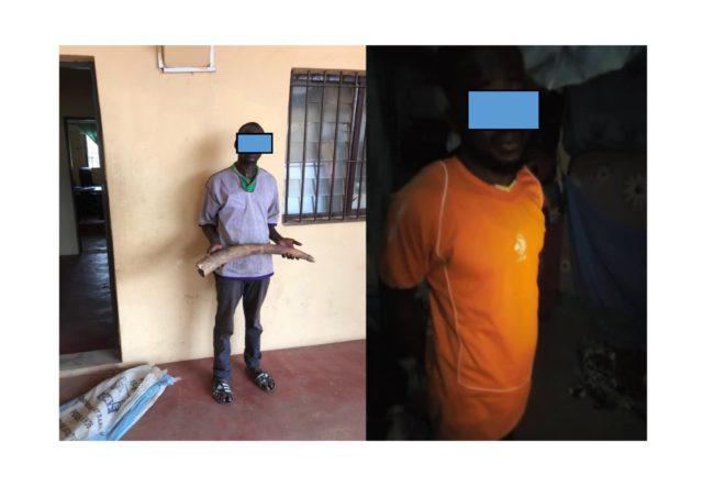 Deux trafiquants d'ivoire condamnés à 12 mois de prison dont 3 mois de sursis