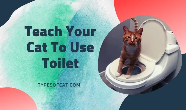 Teach Your Cat To Use Toilet