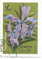 Selo Orquídea Vanda