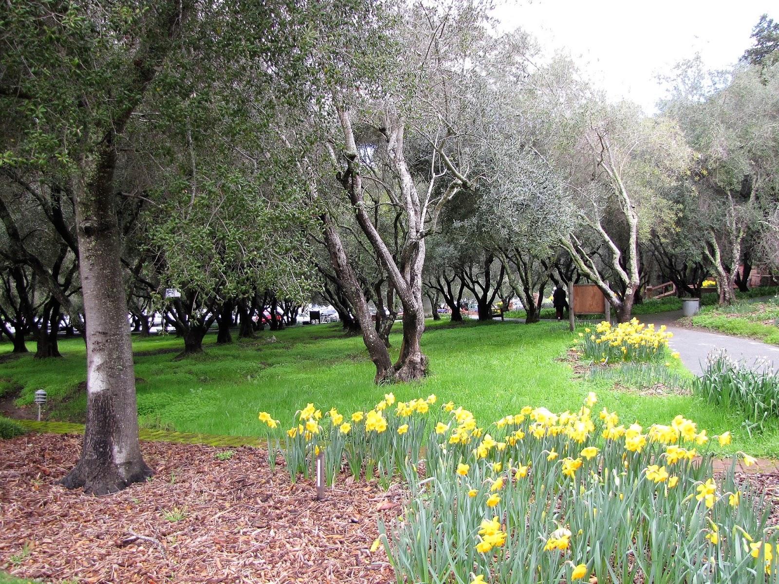 Filoli Garden Hours Garden Ftempo