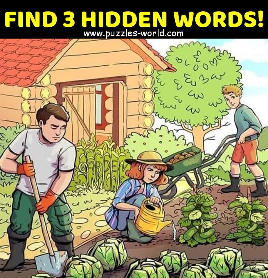 Find 3 Hidden Words