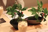 Cafeでのワークショップで、山野草盆栽の完成した鉢とCafeのドリンクの写真