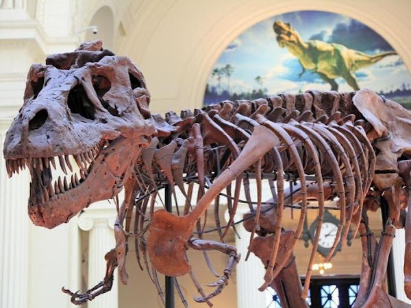 Proses Terbentuknya Fosil dan Penentuan Umur Fosil