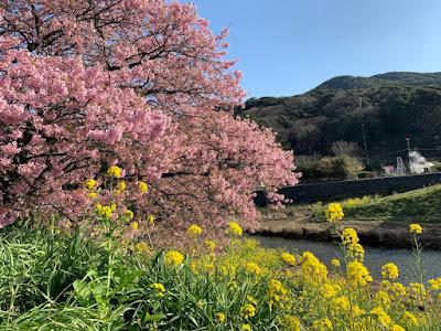 青野川と下賀茂温泉の湯けむり