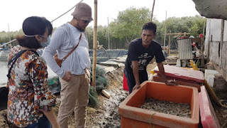 Kelompok Binaan Cirebon Power Berhasil Panen Udang Vaname 1 Ton