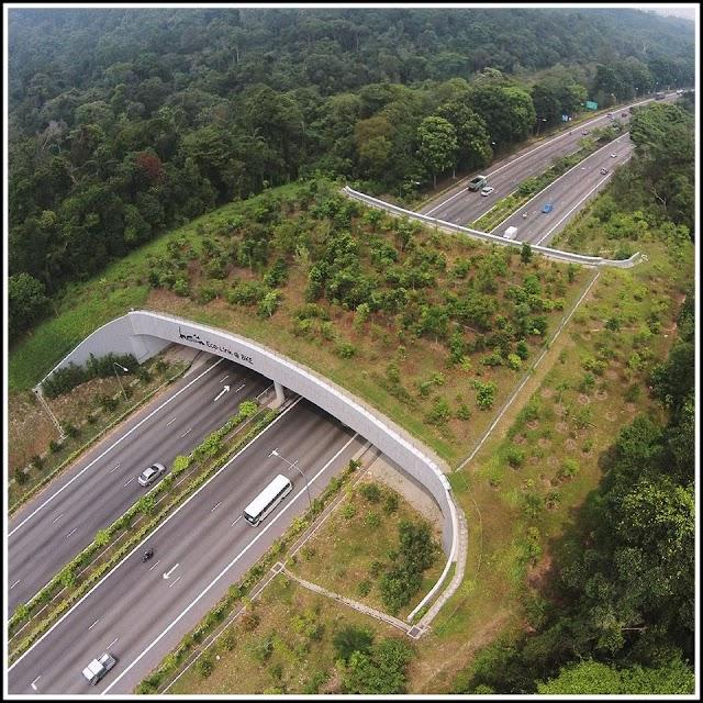 Độc đáo những cây cầu vượt dành cho động vật hoang dã