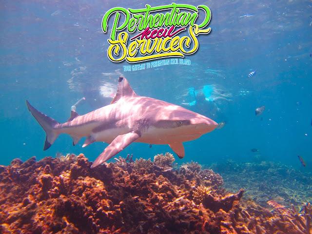 Pakej Pulau Perhentian 2017