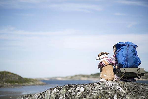 viajeros-colombianos-mascotas-vacaciones-turismo-Travelling-Travel-Predictions-2020-Booking