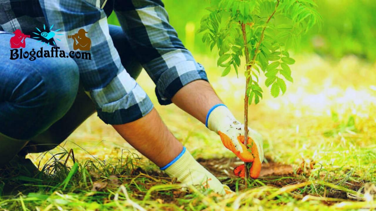 Cara Menanam Pohon yang Baik dan Benar di Rumah
