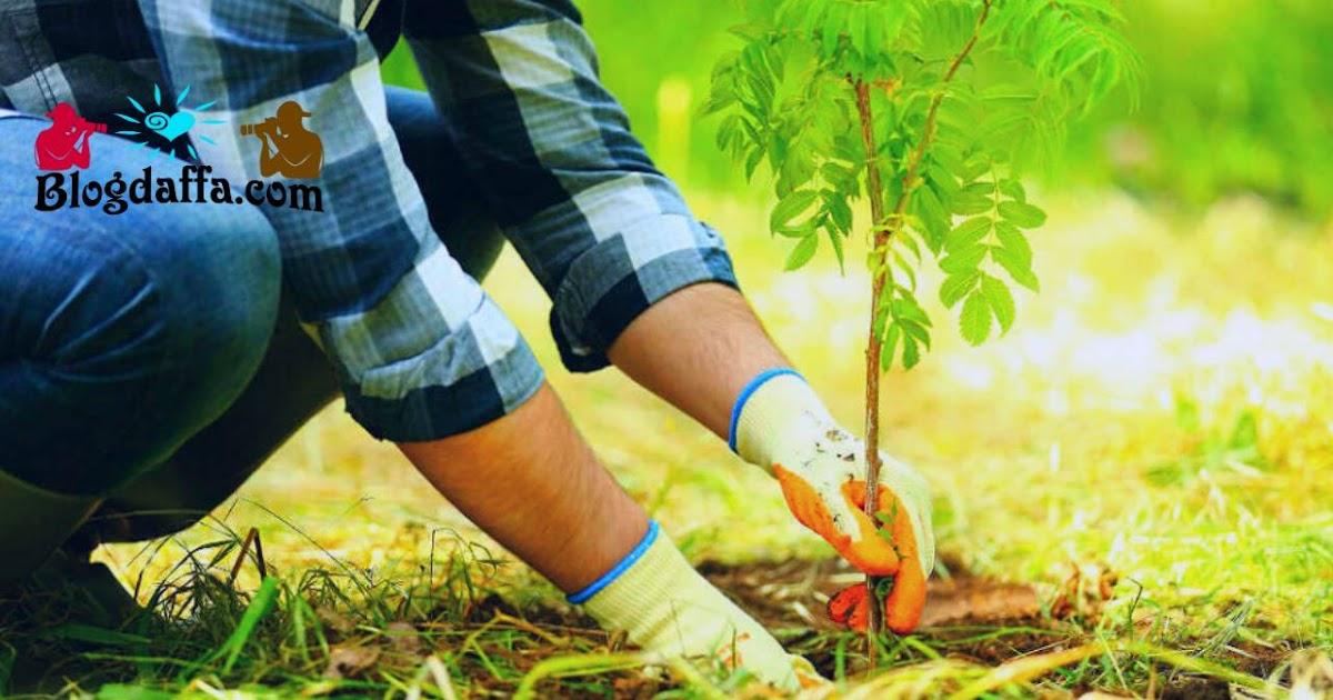 Cara Menanam Pohon Yang Baik Benar Termasuk Saat Musim Hujan Blogdaffa Com