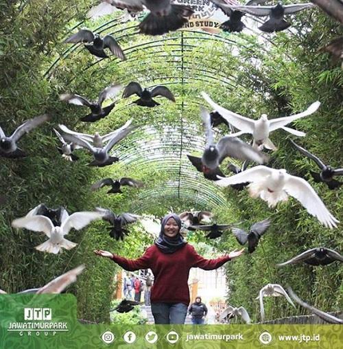 Destinasi Wisata Ece Green Park