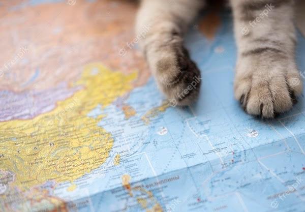 Antara Pasir Gumpal dan Pelet Kayu, Mana yang Terbaik untuk Kucing?