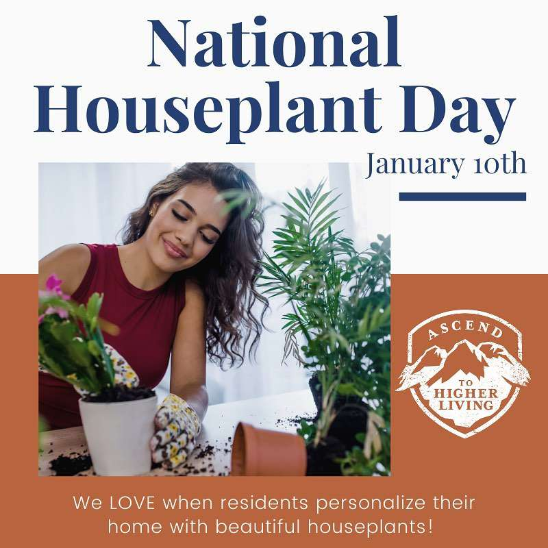 National Houseplant Appreciation Day Wishes Awesome Images, Pictures, Photos, Wallpapers