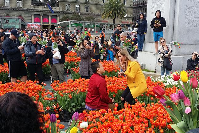 Proposal in Tulip garden San Francisco