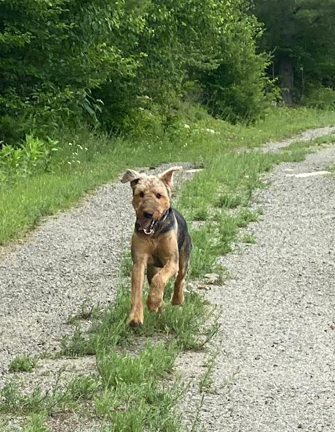 #adirondog