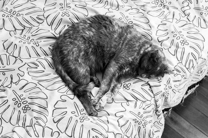 cat on monstera bedsheet