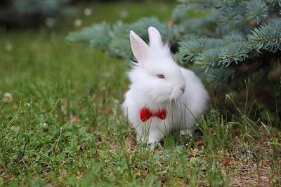 imagen tierna conejito blanco con corbata