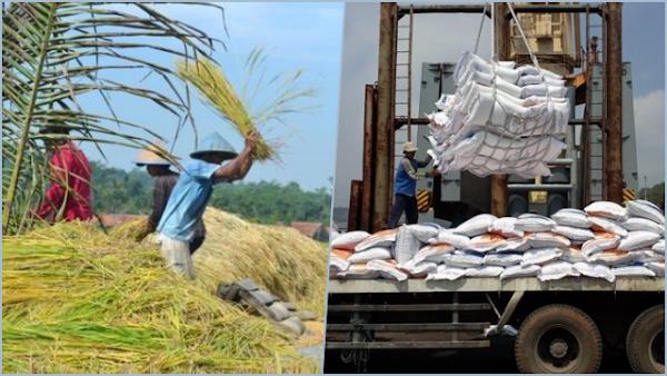 Petani Siap-siap Panen Raya, Pemerintah Mau Impor 1 Juta Ton Beras, Tengku: Kepentingan Siapa?