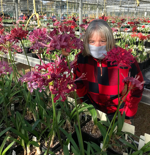 Me in the glasshouse amongst the nerines at Exbury gardens