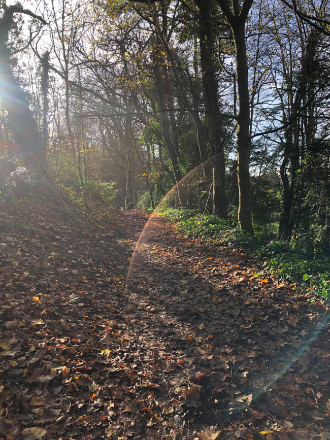 Autumn leaves on a forest path with sunlight coming through the trees