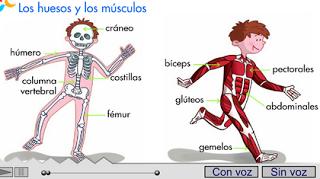 http://primerodecarlos.com/SEGUNDO_PRIMARIA/septiembre/unidad_1/cancion_esqueleto.swf