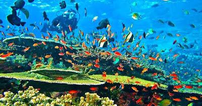 Diving Indonesia, Indonesia, Raja Ampat, Bali, Pulau Komodo, Lombok, Dive Magazine, Maldives