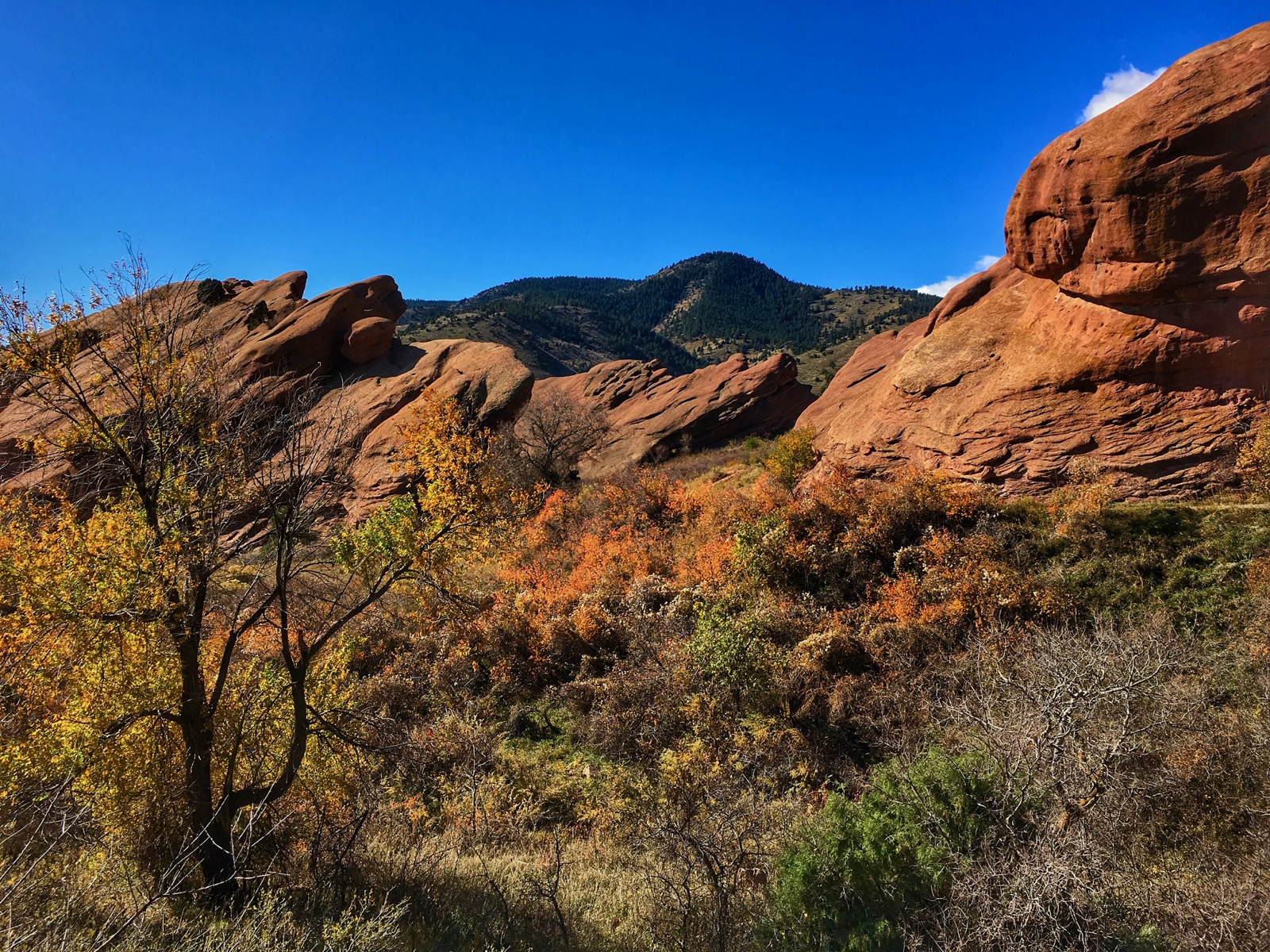 Impression Evergreen: Red Rocks Park - Garden of the Angels