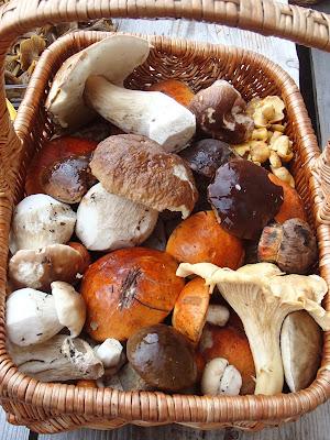 grzyby w sierpniu, grzyby 2016, grzyby na Orawie, grzyby po deszczu, samotne grzybobranie