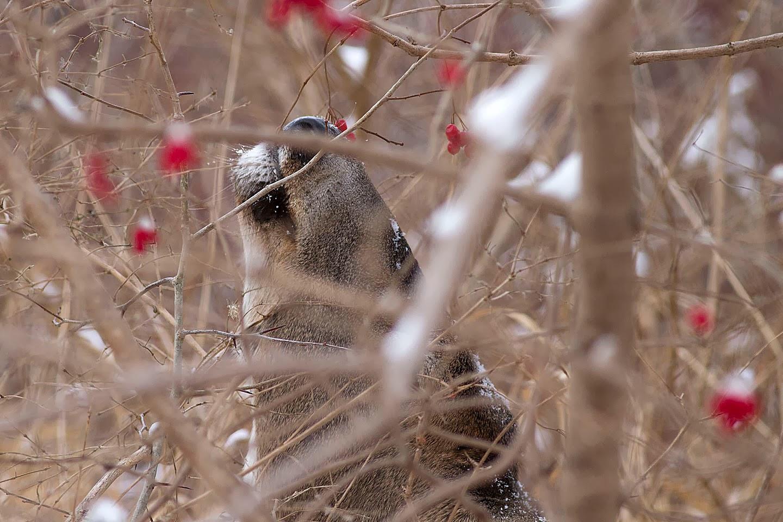 Ann Brokelman Photography: Deer - female and juveniles Close