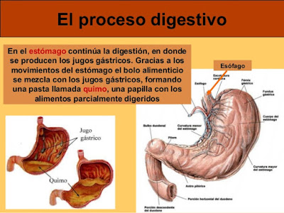 EL BLOG DE QUINTO: TEMA 6 - LA FUNCIÓN DE NUTRICIÓN - I - \