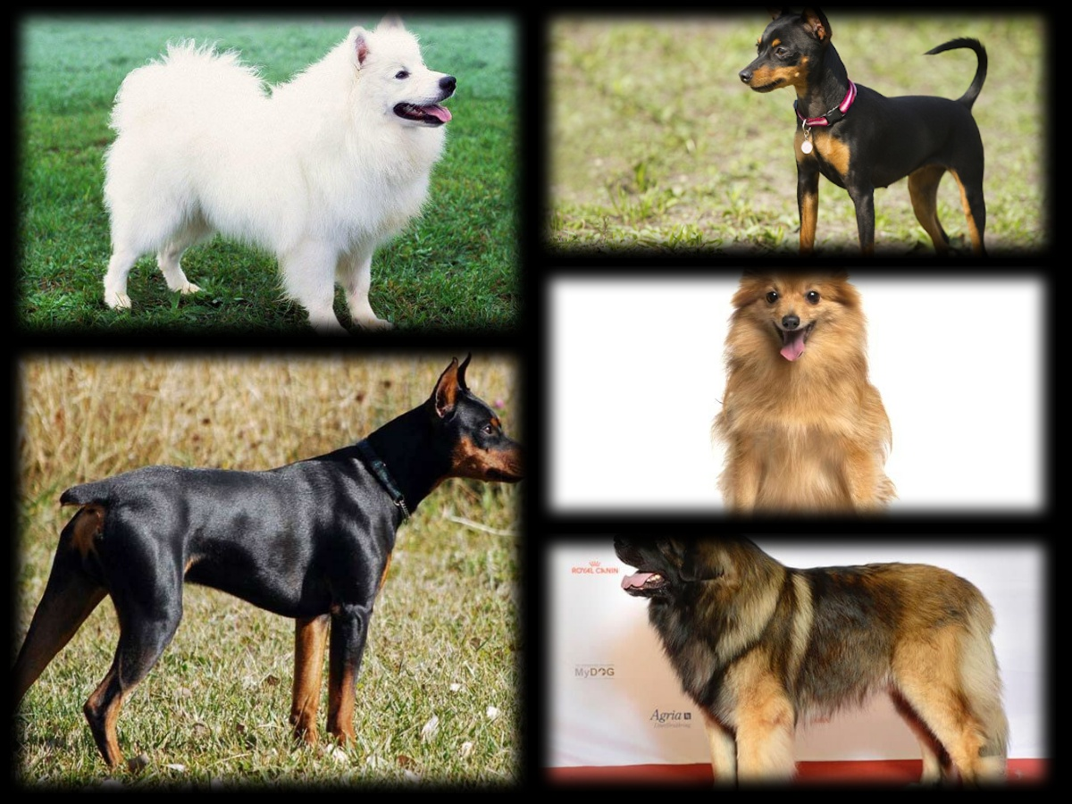 The Top 10 Most Popular German Dog Breeds