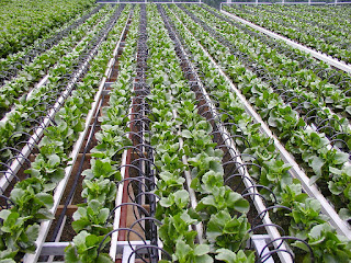 Agriculture Startup in India