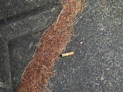 煙草のポイ捨て吸い殻(画像)2016