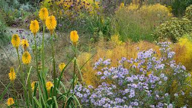 Kniphofia, un género de plantas con tallos florales que aportan estructura vertical y color al jardín