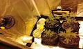 Ζαχάρω: Στην κουζίνα του σπιτιού είχε στήσει την υδροπονική καλλιέργεια κάνναβης (φωτο)