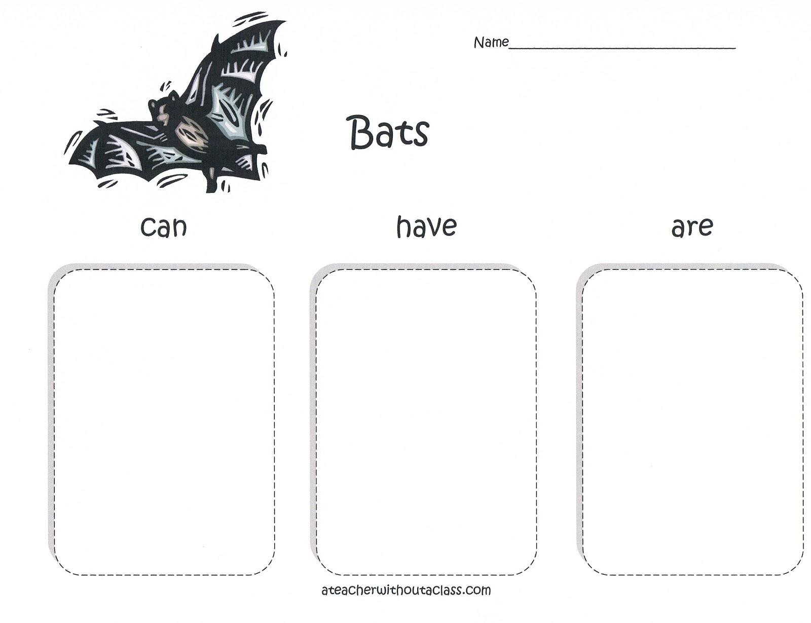 A Teacher Without A Class Bats Bats Bats