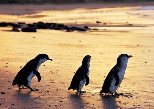Phillip Island Nature Parks