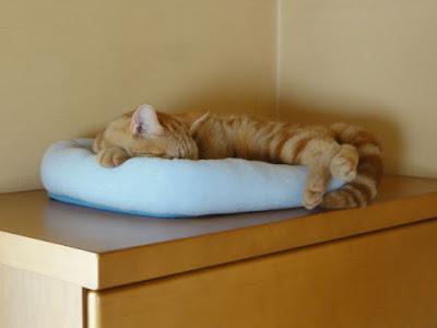 猫用ベッドで寝る猫