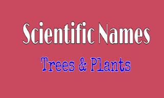 Scientific Names of Trees / Plants