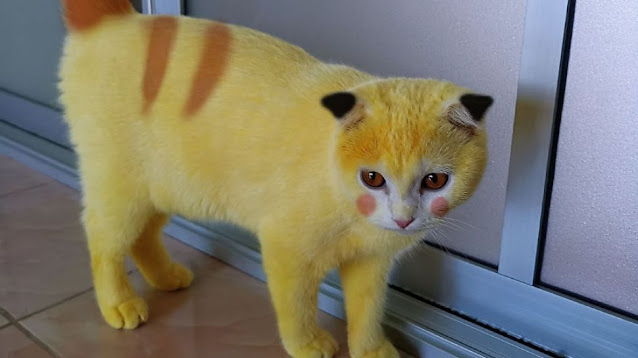 Foto kucing mirip pikacu