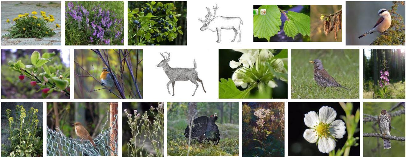 4eafa0d81f25 Lajintuntemuksen edistämiseksi laitan tähän LuontoPortin sanat, joita voi  arpoa tällä. Hakukone on myös kontekstityökalussa. Se on Luonto-kansiossa  toolbar ...