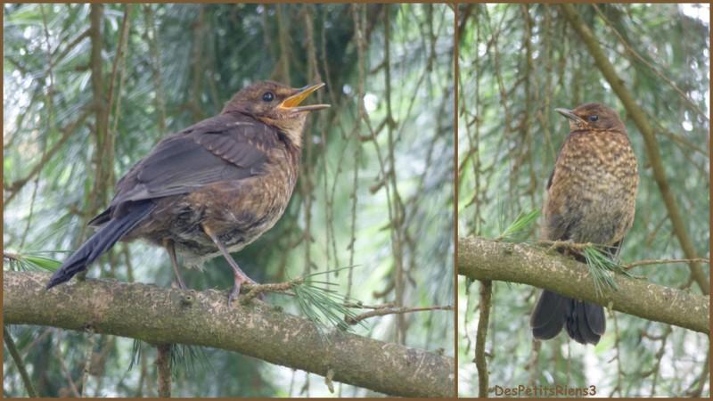 Despetitsriens3 au jardin le printemps des oiseaux for Oiseaux de jardin au printemps