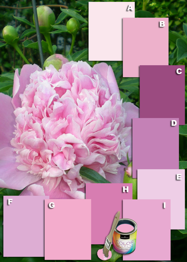 Pink Peonies Benjamin Moore Paints Blooming With Spring Color