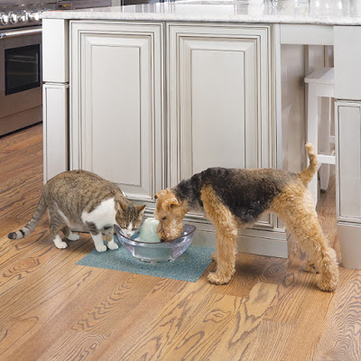 A cat and Airedale Terrier dog drink from a PetSafe Drinkwell® Sedona Pet Fountain