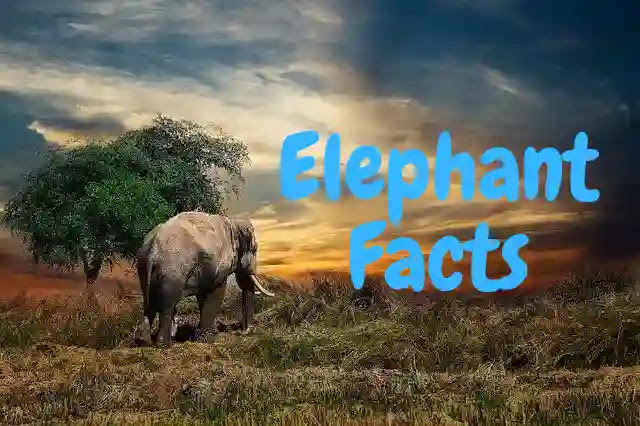 Shocking Facts About Elephant in Hindi